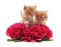 Chatons et fleurs de Brown Photo stock