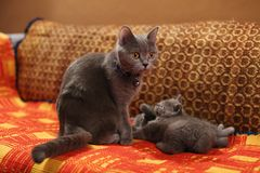 Chatons et mère sur un tapis fait main Image libre de droits