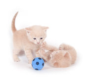chatons jouant au football Photos stock