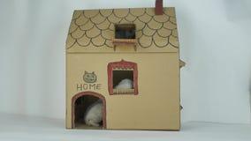 Chatons jouant devant la porte, maison de chats de carton banque de vidéos