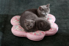 Chatons mignons Images stock