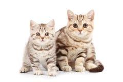 chatons mignons Photo stock