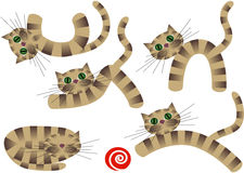 chatons mignons Photos stock