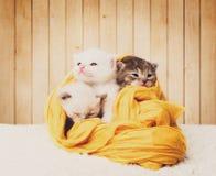 Chatons mignons dans le coton jaune au fond en bois Photos libres de droits