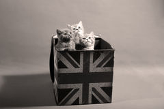 Chatons mignons de bébé Photo stock