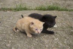 Chatons noirs et rayés Photographie stock libre de droits