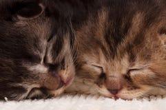 Chatons nouveau-nés Photographie stock libre de droits