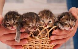 Chatons nouveau-nés Photos libres de droits