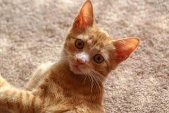 chatons peu Photo stock