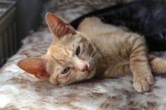chatons peu Image stock