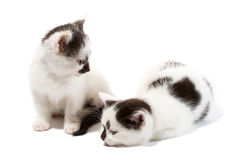 chatons proches deux vers le haut Images stock