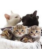 Chatons rayés Photo libre de droits