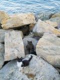 Chatons sauvages vivant dans les roches Photo libre de droits