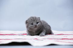 Chatons se reposant sur le petit tapis Photo stock