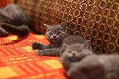 Chatons sur un tapis fait main Photos stock