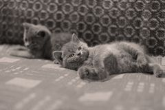 Chatons sur un tapis fait main Photo stock