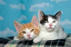 Chatons tigrés prêts pour un petit somme Image stock
