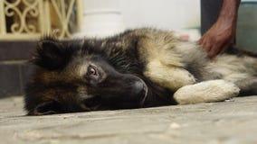 Chatouillement de chien Photos libres de droits