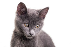 Chatreaux kattunge Arkivfoton