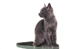 Chatreaux Kitten Sitting Stock Photos