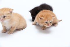 chats Photos libres de droits