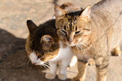 chats Image stock