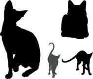 chats Images libres de droits