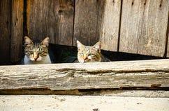 chats Photo libre de droits