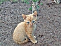 chats Photographie stock libre de droits