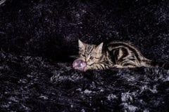 chats Image libre de droits