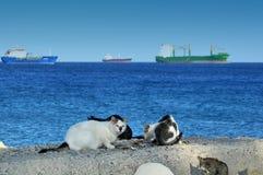 Chats au molo de Limassol Photo libre de droits