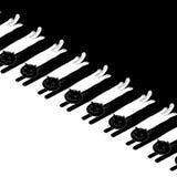 Chats avec les têtes noires et les queues blanches Images libres de droits