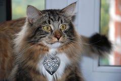 Chats, beaux animaux familiers pelucheux Photographie stock