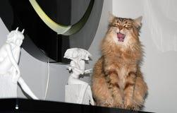 Chats, beaux animaux familiers pelucheux Image libre de droits