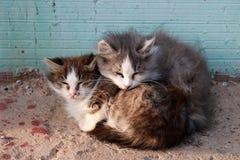 Chats congelés avec les yeux endoloris photo stock