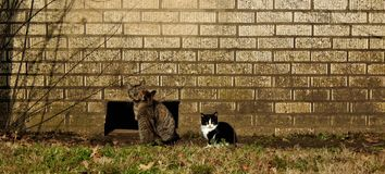 Chats contre le mur image stock