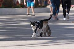 Chats d'Eilat, Israël Beaucoup de chats partent sur des rues et des plages de Photographie stock libre de droits