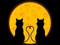 Chats dans l'amour Photo libre de droits
