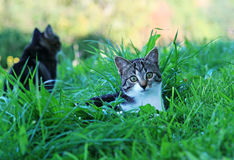 Chats dans l'herbe Photos stock
