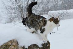 Chats dans la neige Photo libre de droits