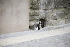 Chats dans la vieille rue photos libres de droits