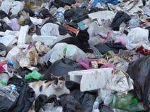 Chats dans les déchets image stock