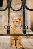 Chats dans Monténégro Photos stock