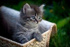 Chats dans un panier sur une herbe Photos libres de droits