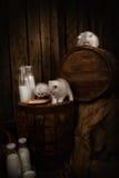 Chats de chat avec du lait Photographie stock libre de droits