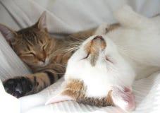 Chats de sommeil Photo libre de droits