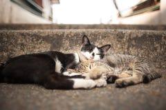 Chats de sommeil Photos libres de droits