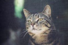 Chats derrière une porte de fil Image libre de droits