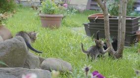 Chats doux de bébé appréciant un jour et une nature d'été jouant sur l'herbe - banque de vidéos