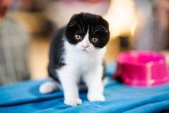 chats drôles dans le panier sur le tissu Photo libre de droits